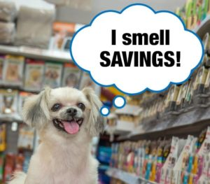 Shitzhu in dog food aisle in different pet store looking for a bargain