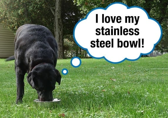Black Labrador who loves his stainless steel dog bowl