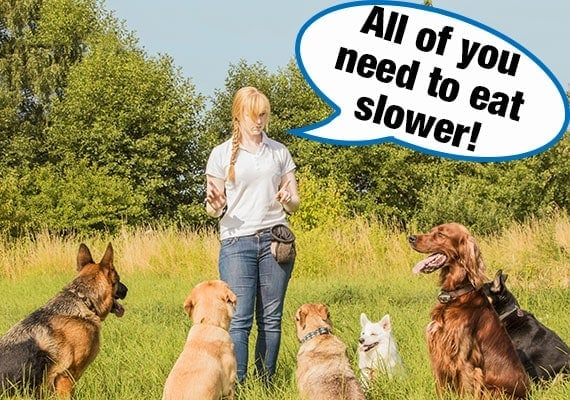 Dog trainer telling dogs of different sizes and shapes that they need a slow-feed dog bowl