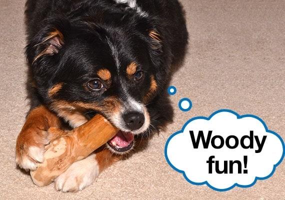 Australian Shepherd chewing on the best wood dog toy, the WARE gorilla chew