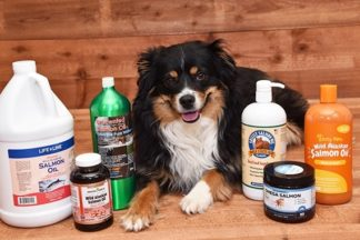 Australian shepherd sitting next to the best salmon oil for dogs that we reviewed