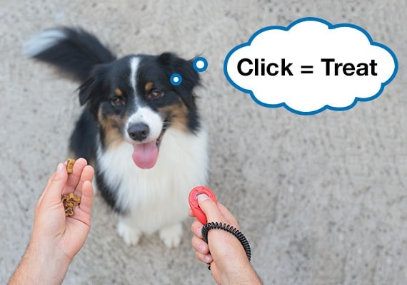 3 Best dog training clickers (11+ tested and reviewed!)