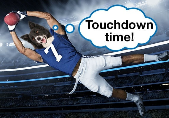 Border Collie dog head on NFL player body leaping for touchdown with football in hands