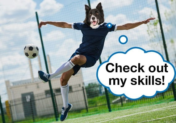 Border Collie dog head on soccer player body kicking soccer ball
