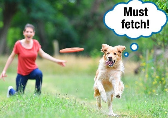 Dog running after Frisbee disc owner has thrown as it glides through the air