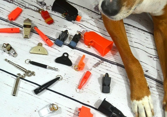 Brown Boxer Foxhound dog laying next to dog whistles we reviewed