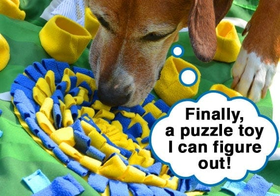 Brown dog figuring out how to remove kibble from loops of snuffle mat