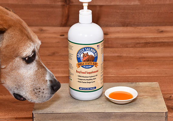 Brown dog sniffing bottle of Grizzly salmon oil winner of best premium salmon oil for dogs