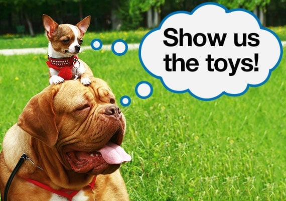 Chihuahua on the head of a mastiff wanting to see the best dog toys we reviewed
