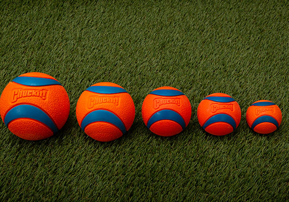 Chuckit! Ultra different sizes of the ball compared side by side