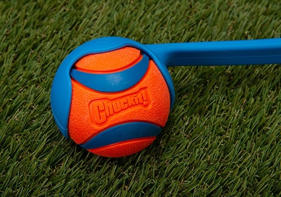 Chuckit! Ultra dog tennis ball sitting in scoop of ball thrower