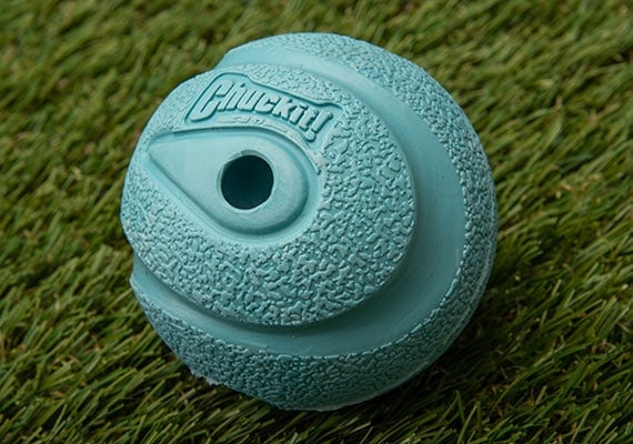 Close up on blue Chuckit! Whistler rubber dog tennis ball