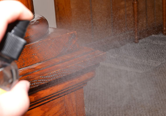 Coating wooden corner of home with anti chew spray
