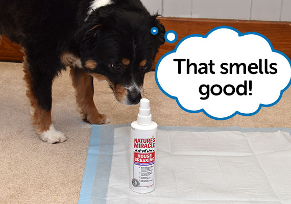 Dog Sniffing Nature's Miracle House Breaking Potty Training Spray next to Pee Pad