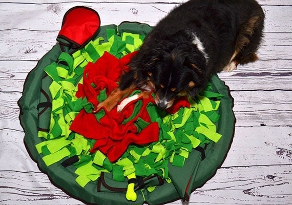 Dog pawing his way throw a round snuffle mat