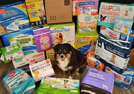 Dog sitting in front of the best pee pads for potty training that we reviewed