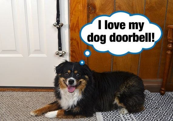 Dog that is sitting in front of jingle bells hanging from door knob used as doorbell