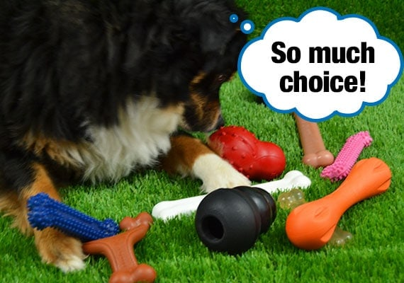 Dog trying to decide which chew toy he wants to play with