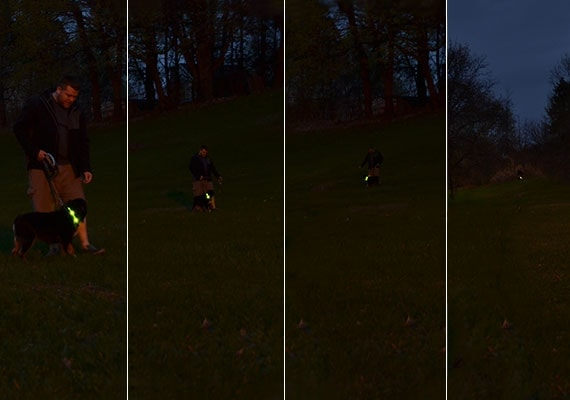 Dog walked by owner at night wearing LED Dog Collar at different distances
