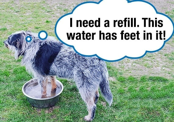 Dog with his feet in his water bowl