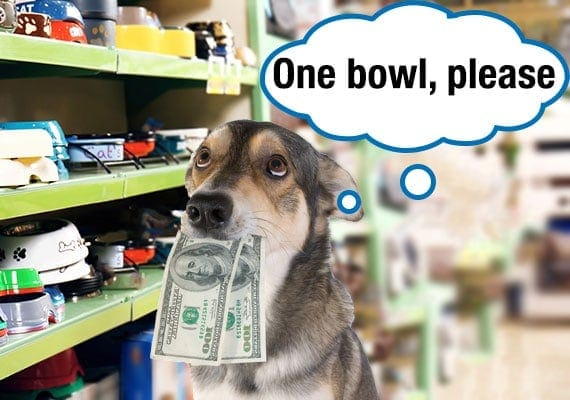 Dog with money in his mouth buying a cheap plastic dog bowl