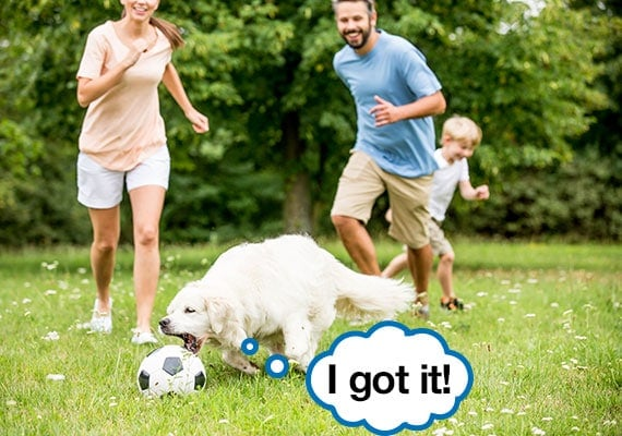 Family of three exercising with dog by kicking around a soccer ball in park