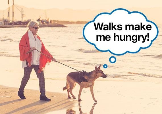 German Shepherd being taken on walk before dinner to improve appetite