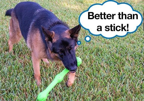 German Shepherd playing with West Paw Zwig Best Stick Dog Toy