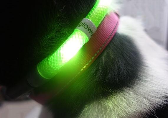 Meilleur collier, harnais et laisse pour chien à LED (21+ testé!)