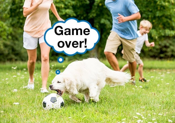 Golden Retriever chasing soccer ball while family is kicking it around a grassy field