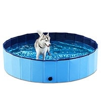 Husky standing in dog pool to cool off in summer