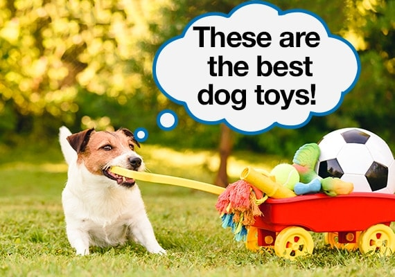 Jack Russel Terrier pulling a trailer filled with the best dog toys