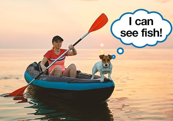 Jack Russel Terrier standing on the front of kayak while woman uses oars to paddle