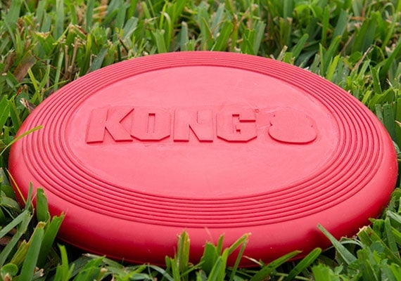 Kong rubber Frisbee on grass in park