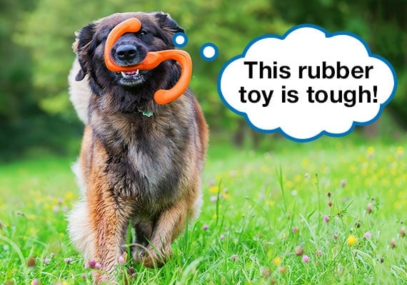 Leonberger running with indestructible rubber dog toy in mouth at park