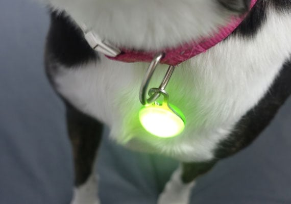 Nite Ize Spot Lit clipped to traditional dog collar