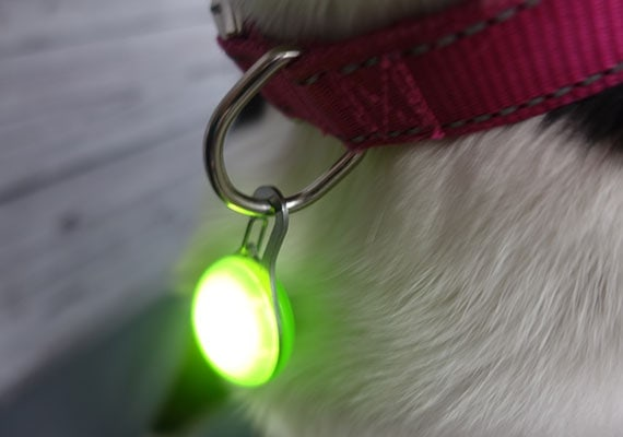 Nite Ize Spotlit LED clip attached to dog collar