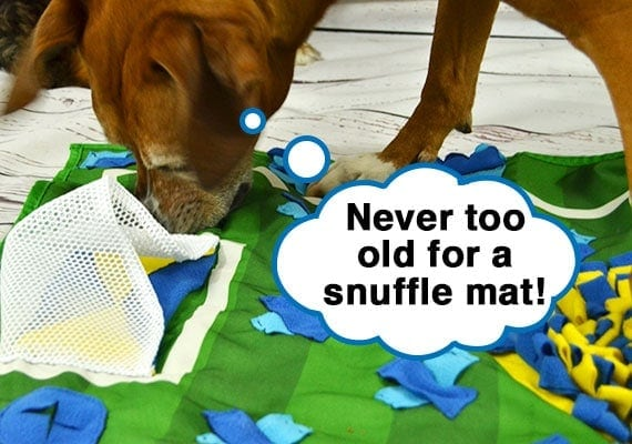 old dog eating treats out of large snuffle mat