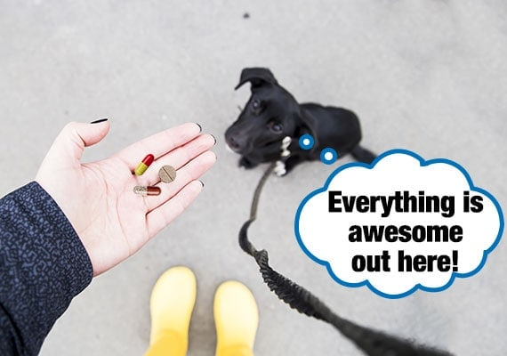 Owner hand feeding puppy on a leash his medicine pills while on a walk