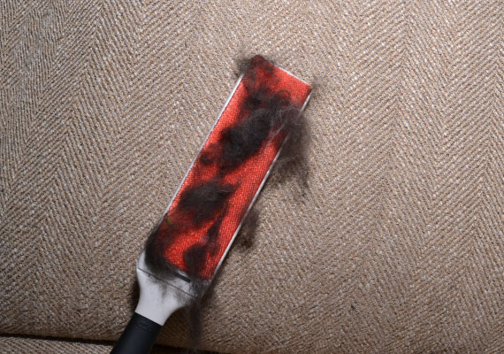 Oxo furlifter furniture brush removing large clumps of thick black dog hair from couch