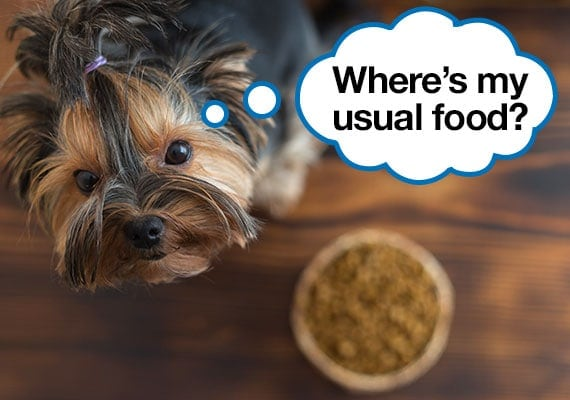 Picky Yorkshire Terrier refusing to eat a new brand of dry dog food to eat
