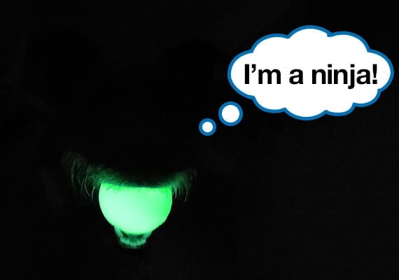 Playing fetch in the dark with the best night-time dog toy, the Chuckit Glow Max