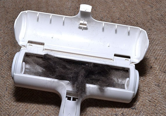Removing dog hair from collection bin of chomchom roller pet hair remover