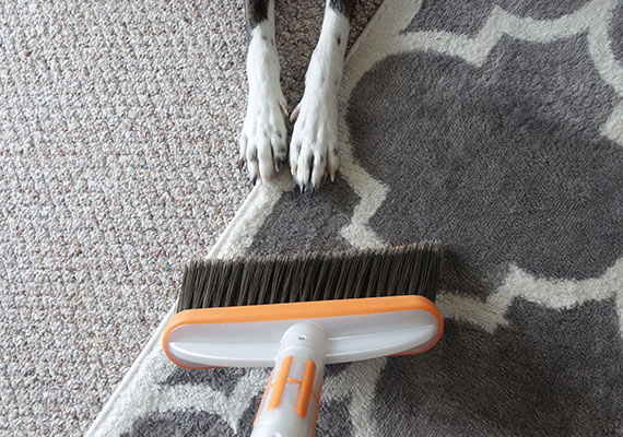 Sweeping rug with Bissel pet hair broom with dog paws on rug