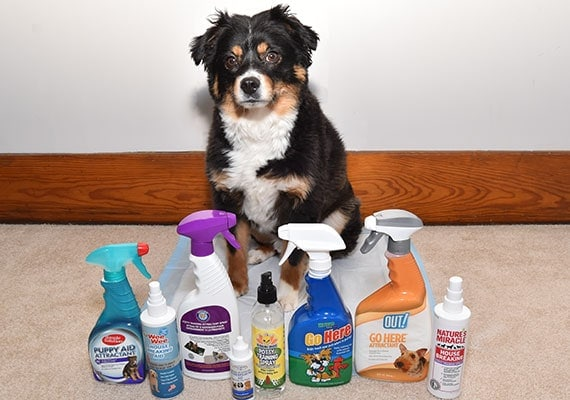 The best potty training sprays and attractants tested and reviewed