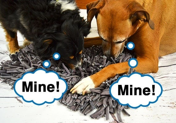 Two dogs fighting over treats as they share a snuffle mat