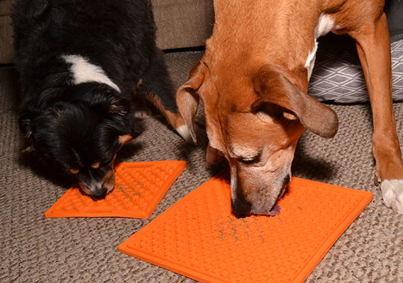 Two dogs licking peanut butter off orange Lickimat Buddy lick mat