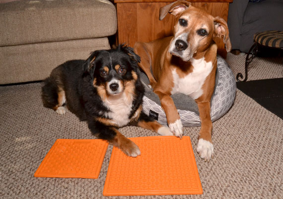 Two dogs waiting patiently to use their lick mats