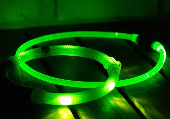 Two green LED dog necklace collars glowing in the dark