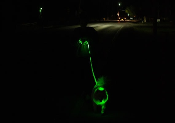 Walking dog on dark street with LED leash and collar lighting up the night